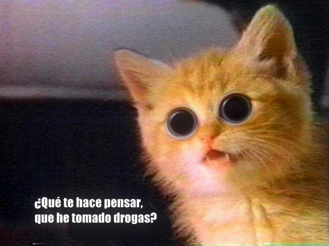 Cat Wtf Meme