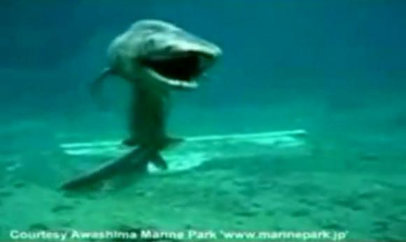 Dragon Shark Related Keywords